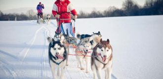 Woman musher hiding behind sleigh at sled dog race on snow in winter